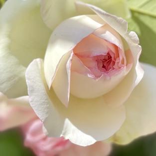 L'âme des Fleurs . Promise