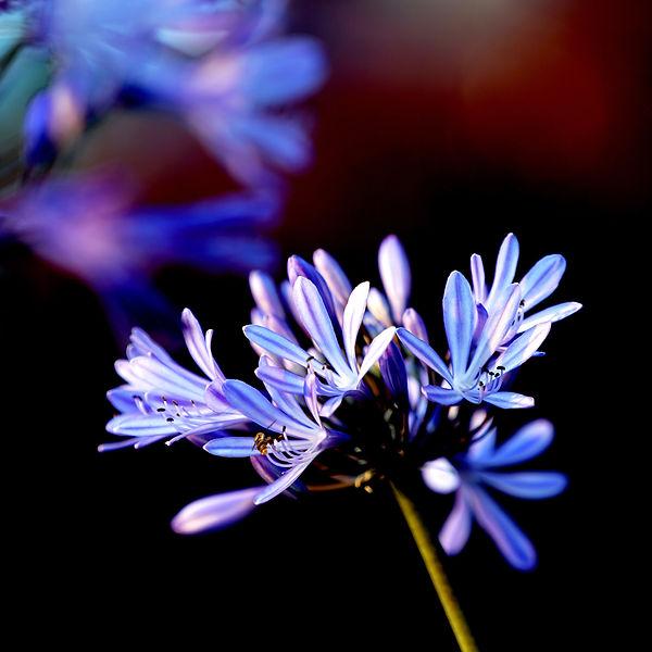 Karin_Lansen_Photography_Purple-Dream_SA-2021.jpg
