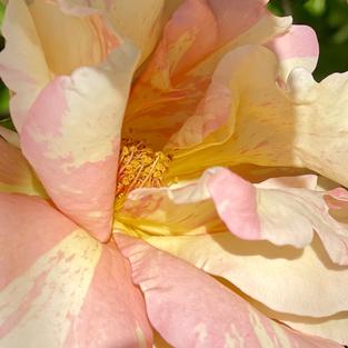 L'âme des Fleurs . Secret