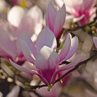 L'âme des Fleurs . Secret Time