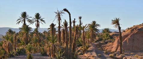 Karin_Lansen_Photography_Sud_Maroc_web_59.jpg