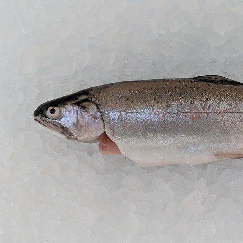 Whole Gutted Trout (approx 300g)