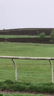 Cantering on the high moor carpet gallop