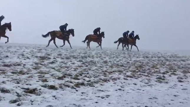 Cantering in the snow