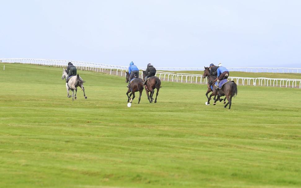 Grass Gallops