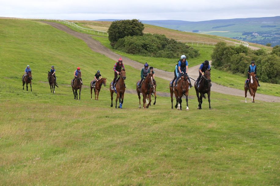 In the middle of the gallops
