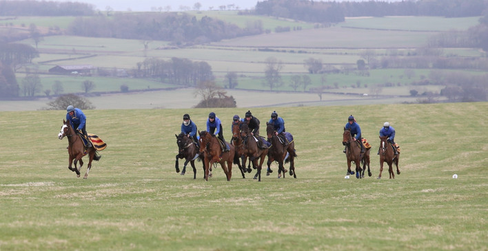 On the grass gallops