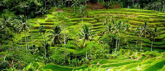 tegalalang-rice-terrace-ubud-bali