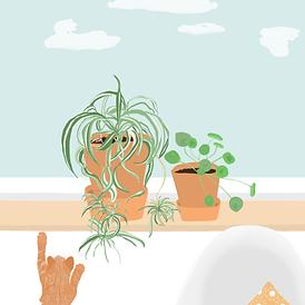 spinnenplant-pannekoekenplant.png