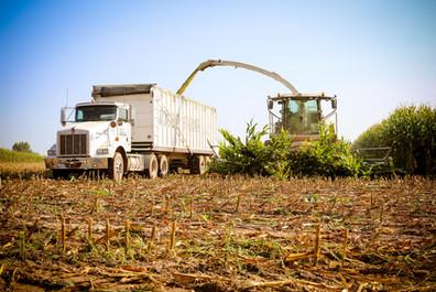 Chopping Corn. September 2018 (30).jpg