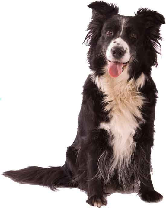 Dog walking, Pet Visiting & Dog Boarding service. Based in Loughton, Essex and covers surrounding areas including Chigwell, Chingford, Buckhurst Hill, Walky Walkies, Debden.