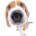 Dog walking, Pet Visiting & Dog Boarding service. Based in Loughton, Essex and covers surrounding areas including Chigwell, Chingford, Buckhurst Hill, Woodford, Debden.