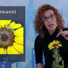Fibonacci por todod lado!