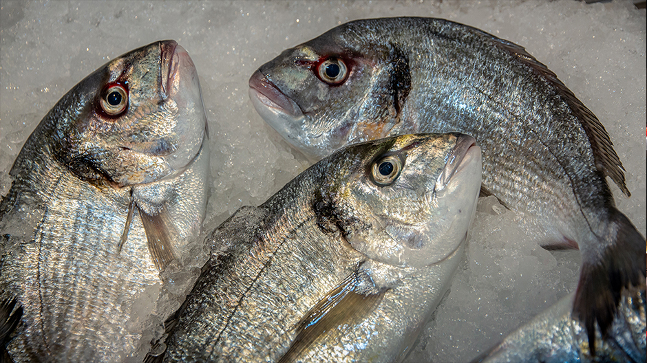 fish project