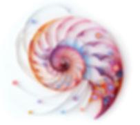 Shell spiral v2onl.jpg