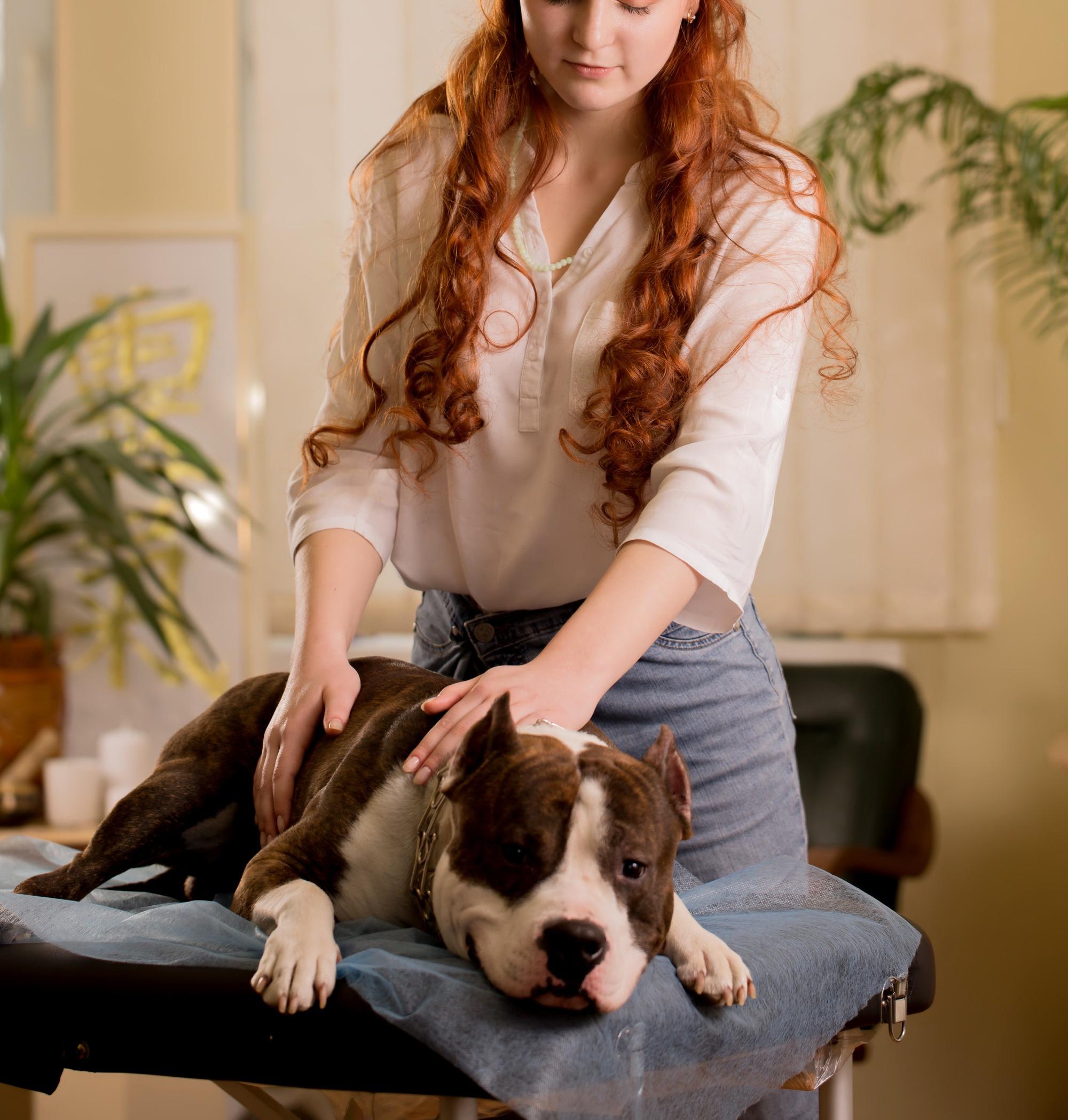 Distance Healing - Pet Care