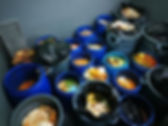 Food Waste in bins.jpg