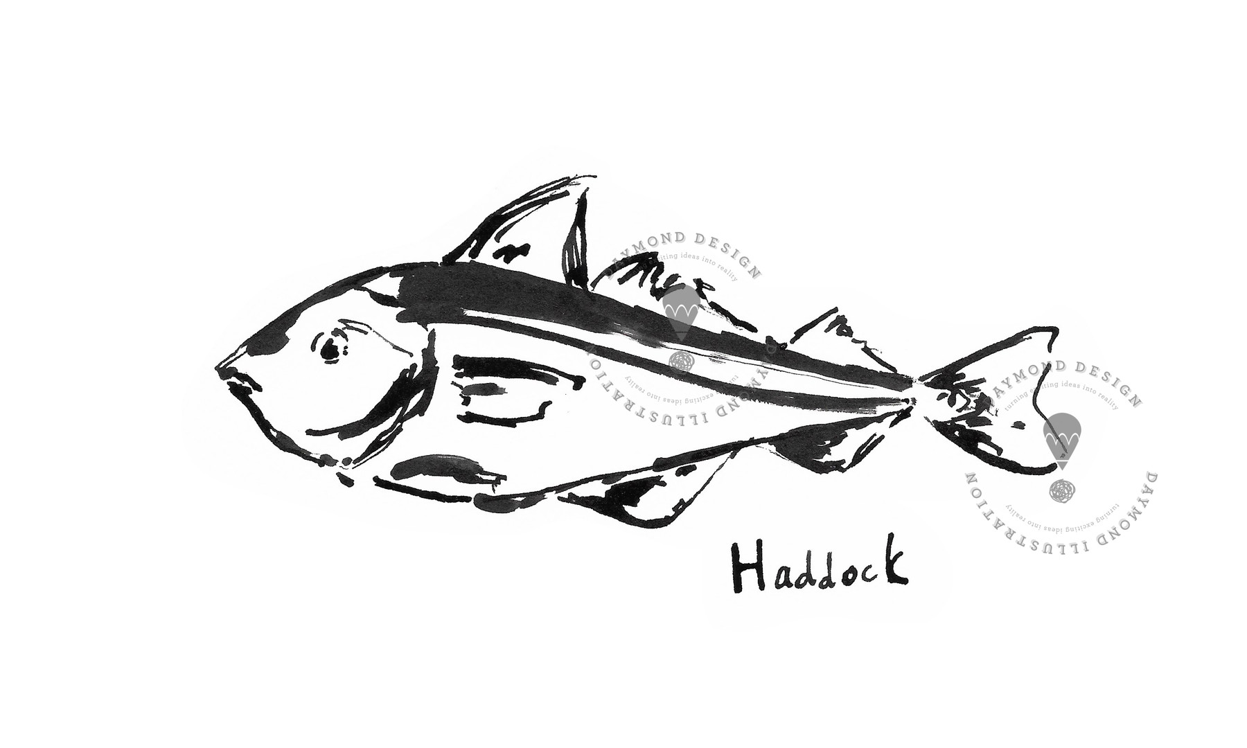 Haddock fish brush ink b&W food illustration by Jenny Daymond Design and illustration