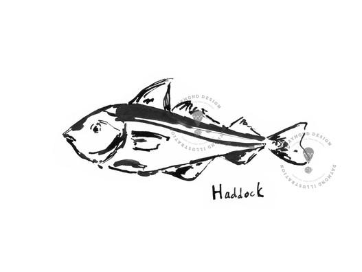 Haddock fish brush ink b&W food illustration by Jenny Daymond Design and illustration