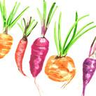 Wonky Watercolour Vegetables