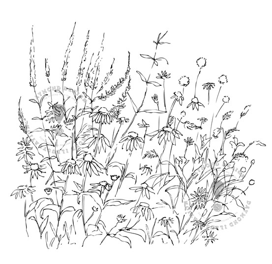 meadow wildflowers b&W wiggly countour line drawing in fine liner, Jenny Daymond Design and illustration