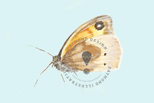 butterfly watercolour illustration by Jenny Daymond Design and Illustration