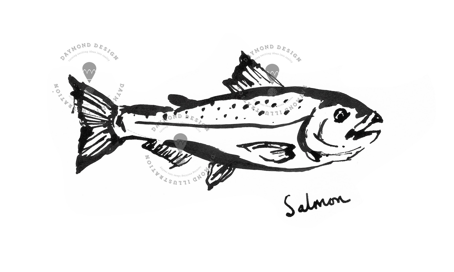 salmon fish brush ink food illustration of seafood by Jenny Daymond Design and illustration