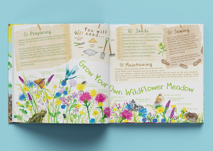 Give Nature a home, Children's activity book idea, watercolour and digital illustration, watercolour wildflower meadows, wildlife, garden, kids outdoor activities, children's illustration, information illustration, Jenny Daymond Design and Illustration