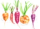 Wonky Veg root vegetables illustration in watercolours, Jenny Daymond Design and Illustration