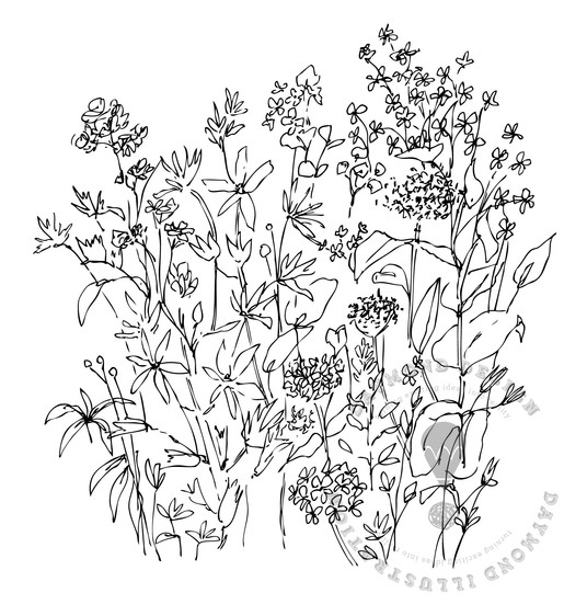 meadow wildflowers b&W wiggly countour line drawing in fine liner, Jenny Daymond Design and illustration 3