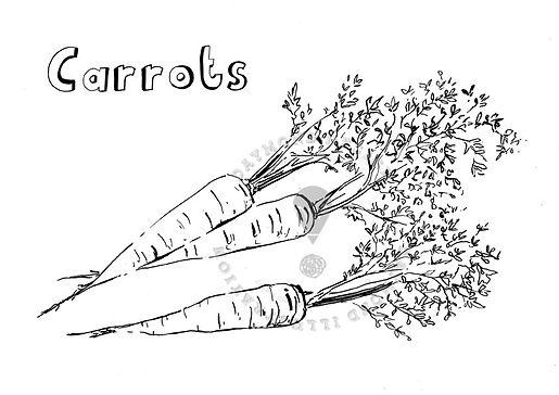 Carrots wonky veg B&W line drawing food illustraton, Jenny Daymond Design and illustration