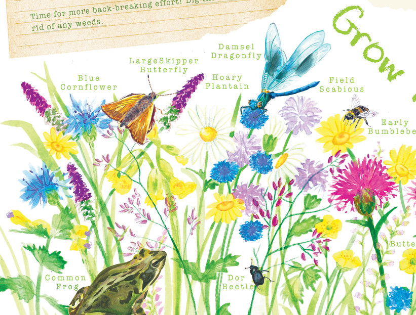 Give Nature a home, Children's activity book idea, watercolour and digital illustration, watercolour wildflower meadows, wildlife, garden, kids outdoor activities, children's illustration, information illustration, Jenny Daymond Design and Illustration 2