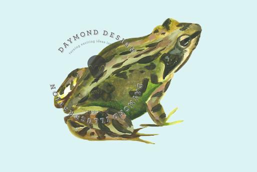 watercolour frog illustration, copyright Jenny Daymond Design and illustration