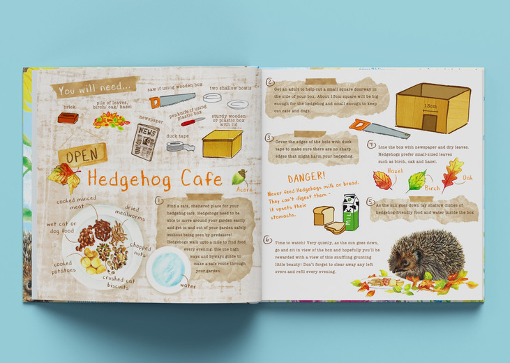 hedgehog Give Nature a home, Children's activity book idea, watercolour and digital illustration, watercolour wildflower meadows, wildlife, garden, kids outdoor activities, children's illustration, information illustration, Jenny Daymond Design and Illustration