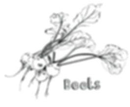 beetroot wonky vegetable illustration, food produce illustration, allotment illustration, food editorial, line drawing, pen and ink food illustration, Jenny Daymond Design