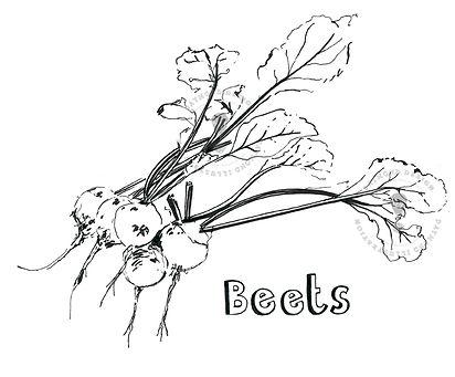 beetroot wonky vegetable illustration, food produce illustration, allotment illustration, food editorial, B&W line drawing, pen and ink food illustration line drawing, Jenny Daymond Design
