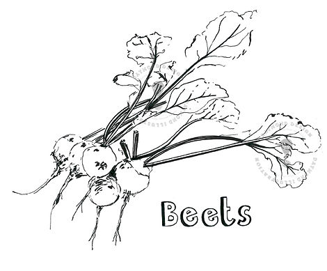 beets, beetroot, wonky veg B&W line drawing food illustraton, Jenny Daymond Design and illustration