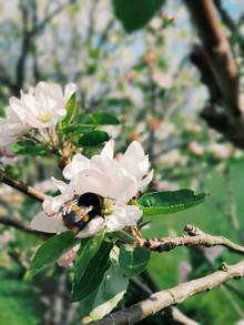 Spring Time, The Rewilding.JPG