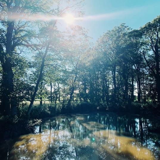 Patty's Woodland Pond
