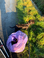 Cockerham litter Pick, The Rewilding, La