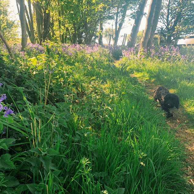 Chico in the Woodland, The Rewilding.JPG
