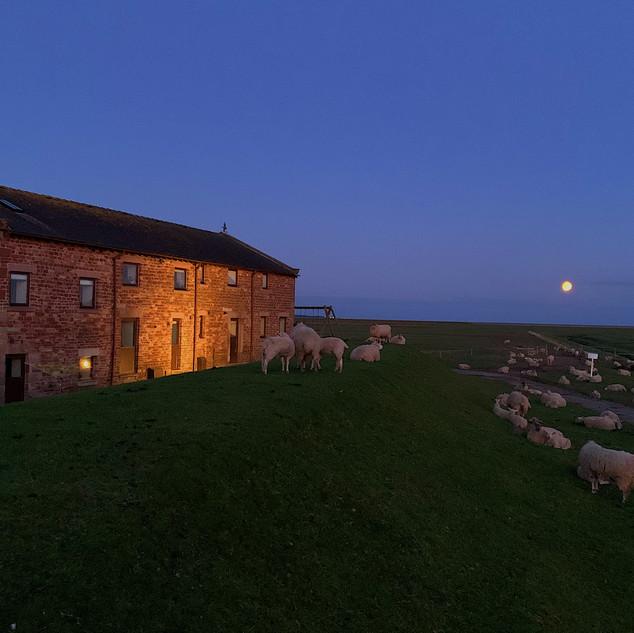 Full Moon at Patty's Barn.JPG