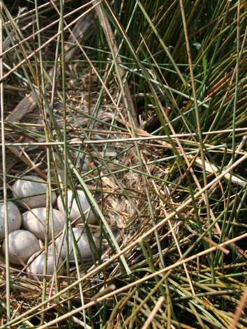 new lake (april 09) 037.jpg