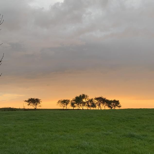 The Rewilding, Lancaster, The Shed, Michelle Parry, Cockerham