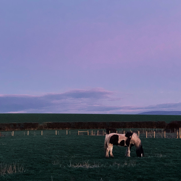 Horse in Field, Cockerham.JPG
