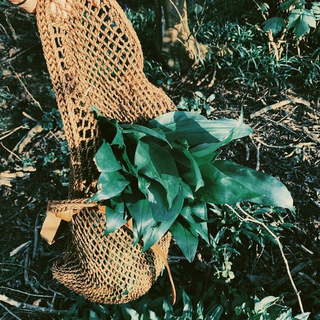 Wild Garlic Foraging, The Rewilding.JPG
