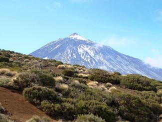 Suertes del Marques Tenerife. Volcanic wines are so intriguing!