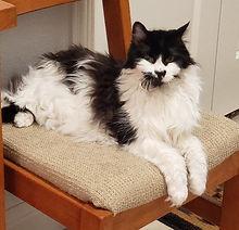 Jasper cat (2).jpg