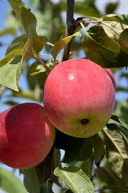 Fruit Guild - Prairie