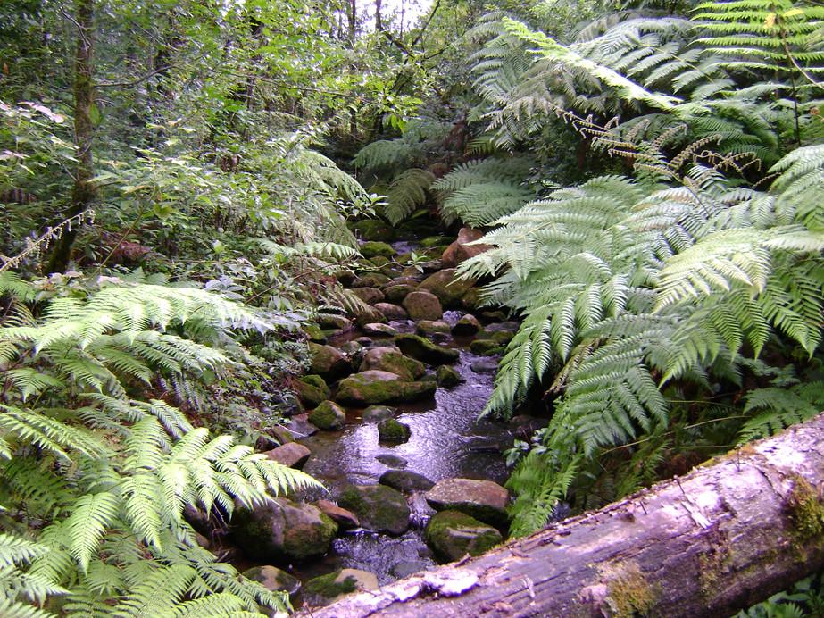Importancia del Bosque de Tlanchinol y sus Teocintles